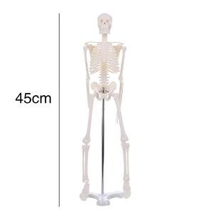 Image 2 - 45 センチメートル人間の解剖学的解剖骨格モデル卸売小売ポスター学ぶ援助解剖人間の骨格モデル