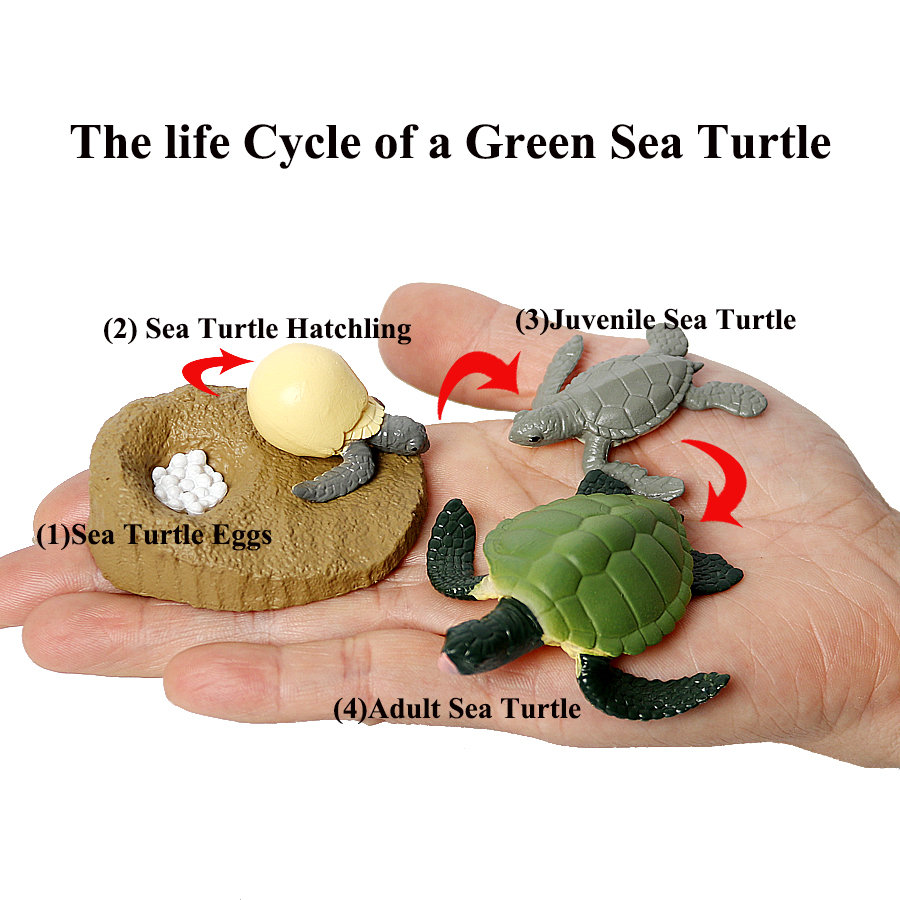 Simulation Ocean Reptile Animals Action Figures Life Cycle of a Green Sea Turtle Model Figures Educational Toys for kids image