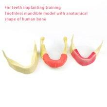 Dental Model Bionic Mandibular Implant Practice Simulated Mandible Teaching Model