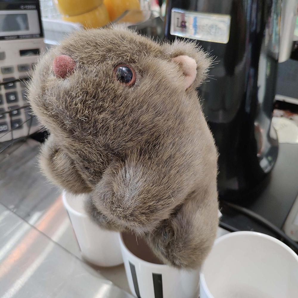18-28cm Simulation Wombat Plush Toys Stuffed Wild Animal  Pig Cavia Porcellus Mouse Dolls for Baby Kids Children Gifts