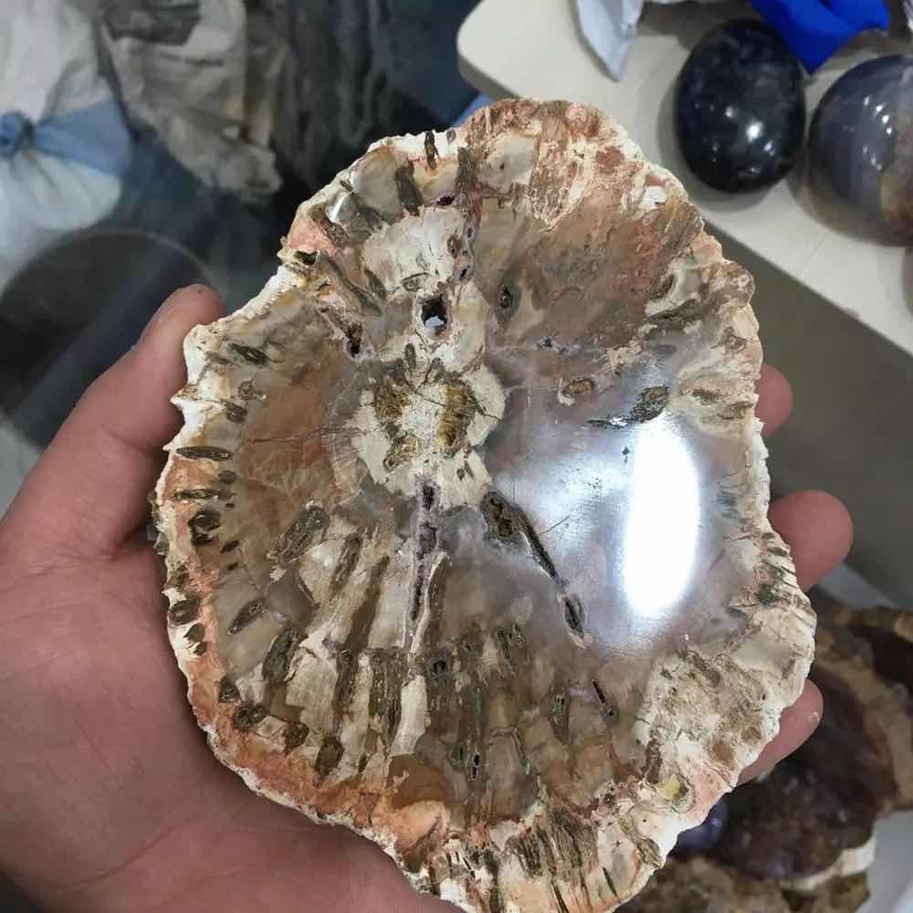 MOKAGY Natural Fossils Wood Quartz Stone Crystal Slice 1pc