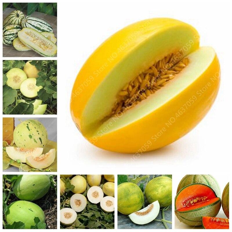 20 Pcs Japan Fruit Cantaloupe Melon Original Superior Honey Dew Green Fresh Fruit Delicious Muskmelon Bonsai Potted Flower Plant