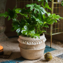 Straw Effect Cement Flower Decoration Tassel Flower Pot Pot Pot Pot Pot Art Decoration