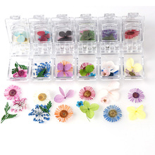 1 Box Real Dried Daisy Flower Dry Plants For Epoxy Resin Pendant Necklace Jewelry Making Craft Mold Filling DIY Nail Art