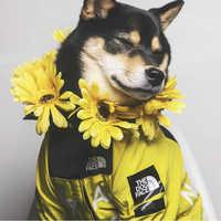 Vêtements pour chien Adidog bouledogue français Pupreme chemise chien coupe-vent Sport rétro chien sweats à capuche vêtements pour animaux de compagnie Ropa Perro chiot chien carlins