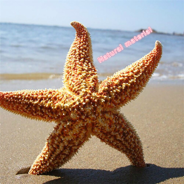 Фото 20 шт ракушка из натуральной морской звезды пляжные поделки