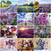 HUACAN Pictures By Numbers Flower DIY Drawing Canvas Hand Painted Oil Painting Lavender Home Decoration