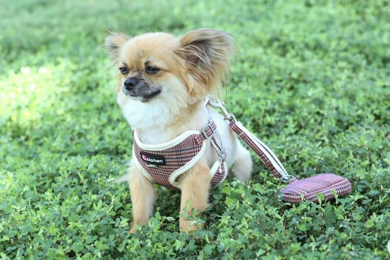 Son Chen Bag Dog Useful Product Dog Hand Holding Rope Small Medium Vest Style Net Type Chest And Back Nursing Breathable