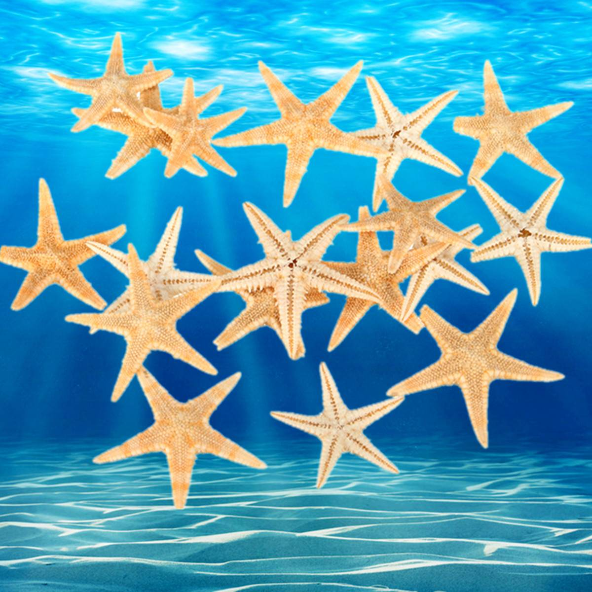 20pcs/set 1.5-2.0cm Natural Sea Star Ocean Sea Animal Fish For Micro Landscape Terrarium Decorative Ornament Crafts