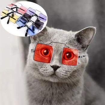 Dog and Cat Glasses 1