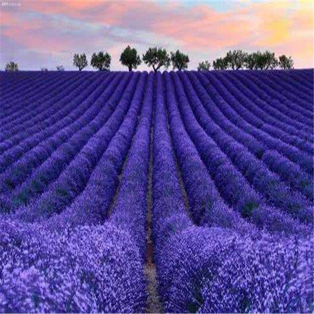 Plant Bath Salts 300Pcs Italian Lavender Flower Essence AN-ZZ32-300 5