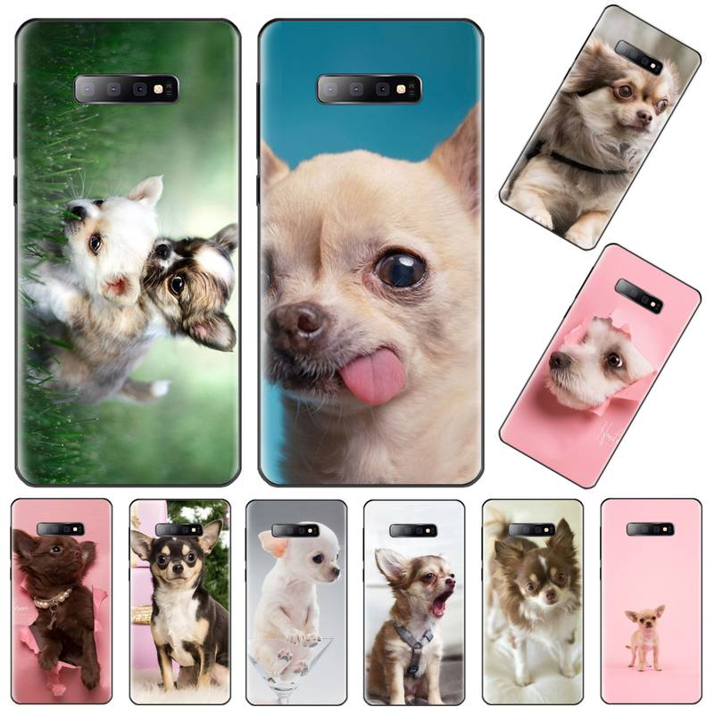 Cute animals friend chihuahua <font><b>dog</b></font> Cover Soft Shell Phone <font><b>Case</b></font> For <font><b>Samsung</b></font> S6 S7 edge S8 S9 S10 e plus A10 A50 A70 note8 <font><b>J7</b></font> 2017 image