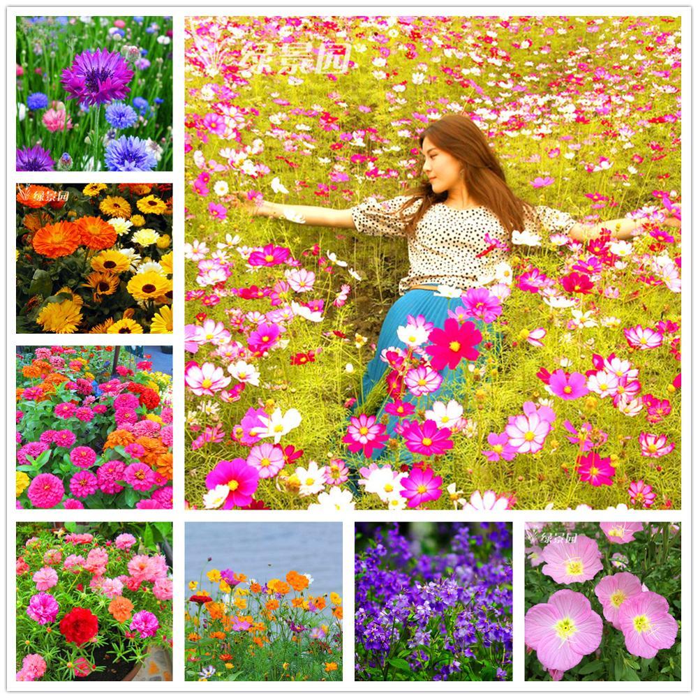 Plant Flowers Bath Salts Aromatic Galsang Flowers Essence 100Pcs XZZ-181