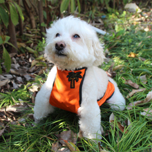 The Chinese Styled Waterproof Bid For Dogs Protect Pet's Belly Health Puppy Pet Summer Outdoor Waterproof For Dogs Cats Clothing dogs dogs too much class for the neighbourhood lp