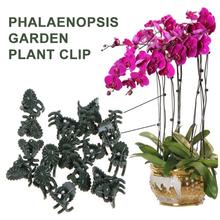 50 sztuk 20mm plastikowe roślin wsparcie klipy roślin Fix klipy orchidea macierzystych winorośli wsparcie kwiaty gospodarstwa wiązanej pakiet ogrodnicze tanie tanio Z tworzywa sztucznego