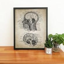 Vintage de cabeza y cerebro humano anatomía póster impreso, lienzo artístico de la neurociencia de la anatomía humana pintura Oficina de médicos Arte de la pared Decoración