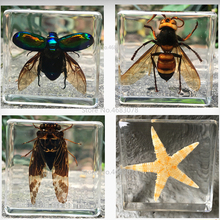 Grey Butterfly Insect Specimen In Clear Resin Educational Explore Instrument School Biological Teaching Supplies 38x38x14MM