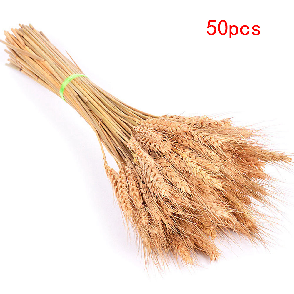 50pcs-primary-50cm