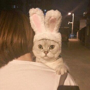 Dog and Cat Rabbit Hat 3