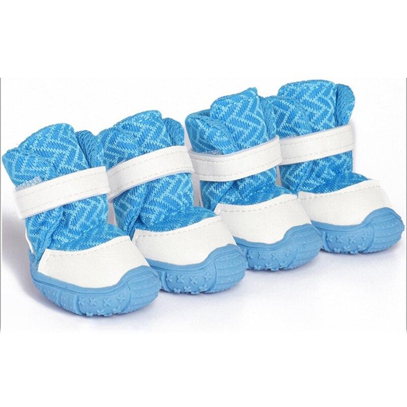 blue dog shoes