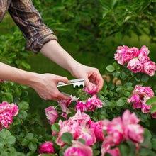 3 sztuk Rose szczypce usuwania zadziorów narzędzie ogrodowe kwiat cięcia narzędzie kwiaciarnia metalowy kwiat Rose cierń macierzystych liści striptizerka przycinanie kwiat