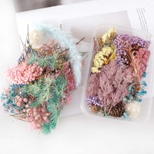 1 boîte de vraies fleurs séchées colorées