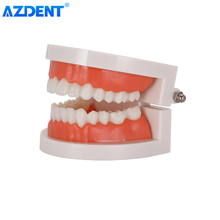 1: 1 Standard Tooth Model Dentist Teaching Study Model Adult Teeth Demonstration Oral Care Education Tools