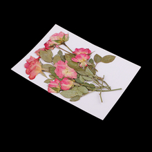 10 Pieces Real Pressed Bunch of Rose Buds with Brunches Dried Flowers For Scrapbooking Wedding Invitation Card Making