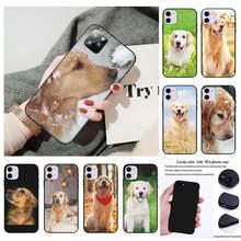 Popolar bonito animal de estimação cão golden retriever telefone caso para xiaomi redmi 5 6 6a s2 4x go 7 7a 8 8a k20 9 k30 9a pro plus