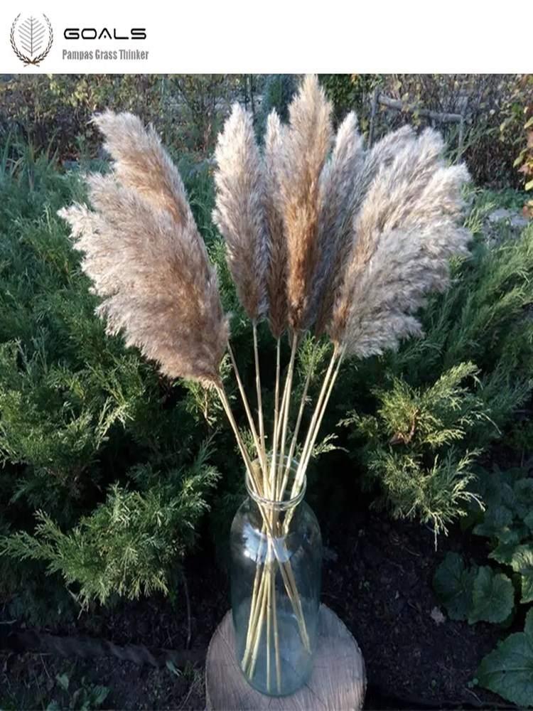 Wedding-Flower Grass-Decor Dried Pampas Natural-Plants Home 20pcs Bunch