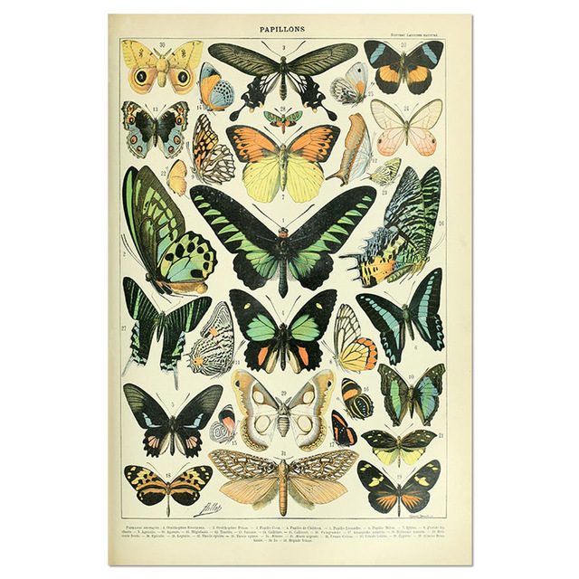 Animal-Botanical-Educational-Vintage-Poster-Butterfly-Posters-and-Prints-Fruit-Canvas-Painting-Vegetable-Picture-on-The.jpg_640x640 (6)