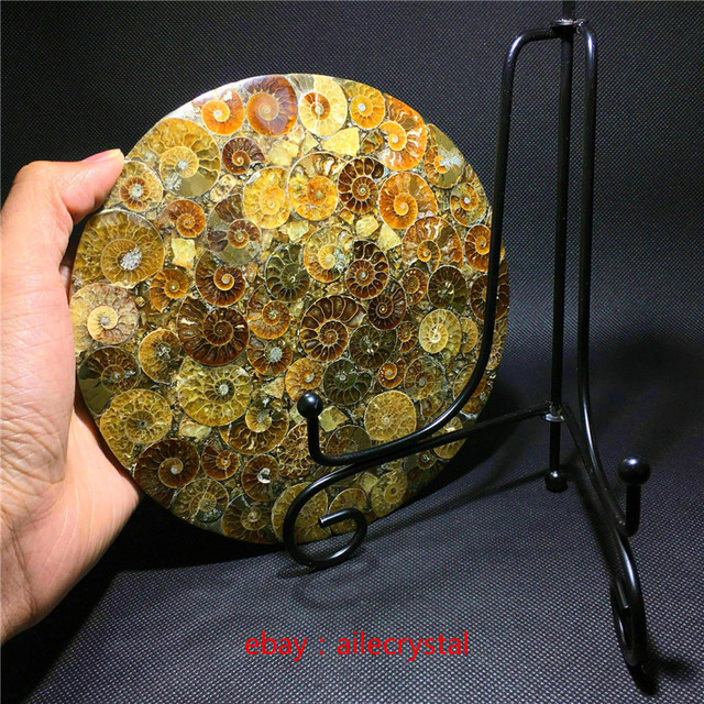Natural Ammonite Disc Fossil Conch Specimen Healing +Stand 1pcs 5