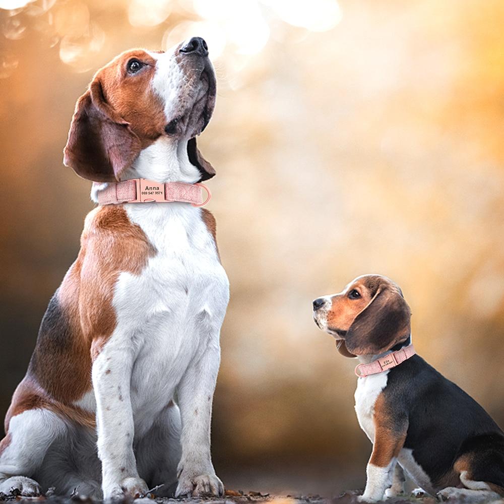 köpek boyun tasması