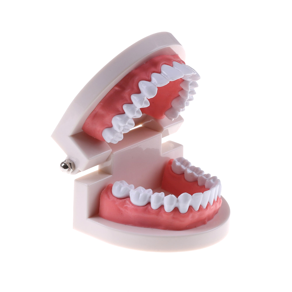 Dental Tooth Model Base With Teeth Hole Dental Cavity Pathology Teaching Equipment Tool Kids Toy Model Building Kits