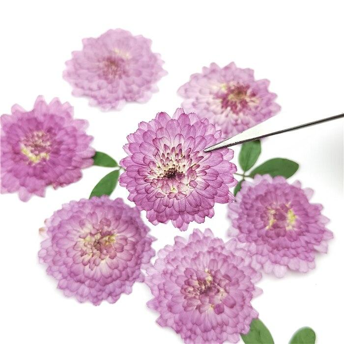 24 шт., натуральные прессованные цветы, настоящая сушеная Хризантема, сделай сам Искусство ремесло подарок на день Святого Валентина Закладк...