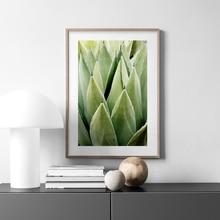 Настенная Картина на холсте с зеленым алоэ растениями ландшафтом