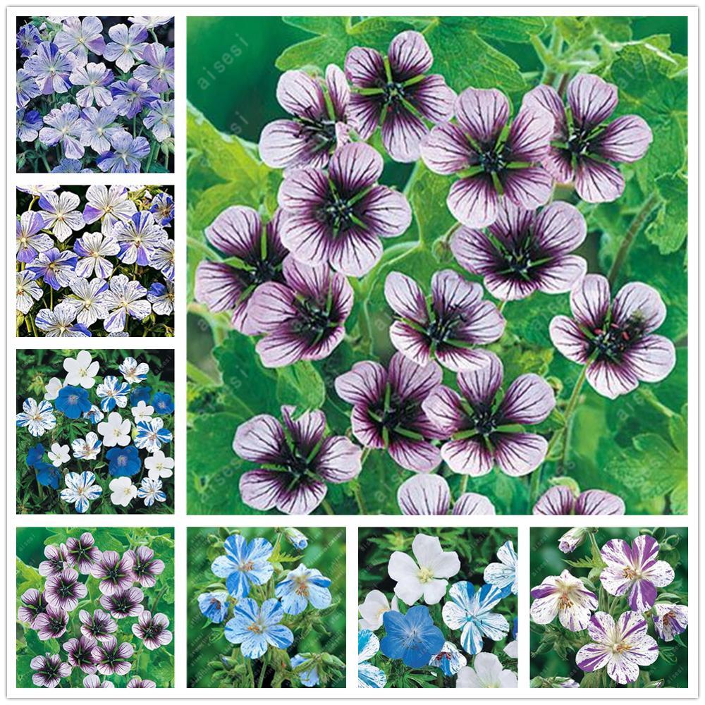 Plant Flower Bath Salts Geranium Rare Essence 100Pcs XZZ-49