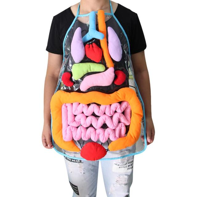 Anatomy Apron