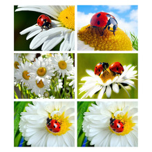 5D DIY Diamond Painting Flowers Insect Diamond Mosaic Full Display Square Crystal Embroidery Scenic Rhinestones Pictures azqsd diamond painting santa rhinestones pictures christmas diamond mosaic full display embroidery with crystals home decoration