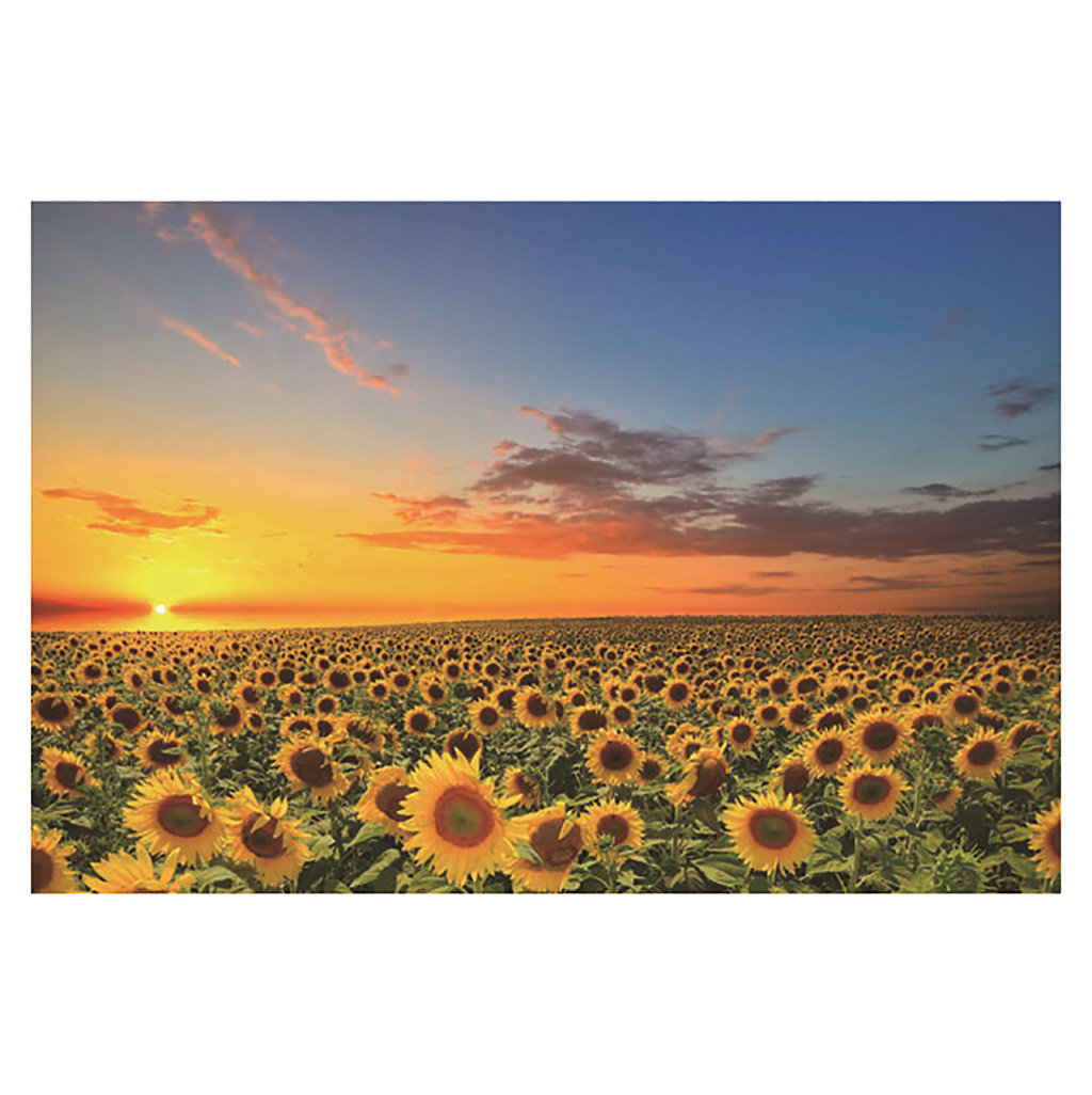 1000 Pieces Jigsaw Wooden Puzzles Adults Large Game Interesting Puzzles Toys Personalized Gift Landscape Sunflowers Puzzles