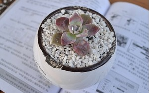 Image 4 - 100g/pack,Perlite corrosion breathable root rot   seedling planting soil,garden supplies,Gardening media