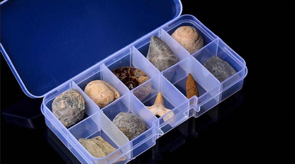 507 ++++++ 10 Spesimen Alami Tiga Daun Serangga Fosil Amber Batu