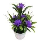 Bonsai Desktop Plant...