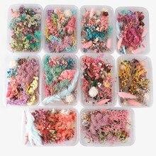Al azar 1 caja más de 8 estilos mezcla de flores prensado y secado de hojas secas plantas para decoraciones de Arte de uñas accesorios de joyería accesorios de fabricación de bricolaje