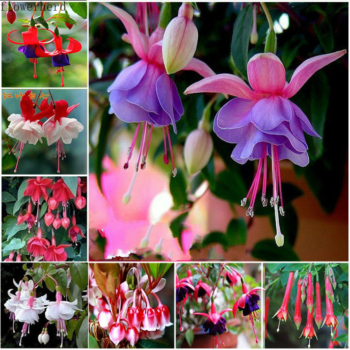 Chinese Enkianthus Flower Plant Seed Potted Spring Summer Fall Winter Seasons Easy Sowing Gargen Tools