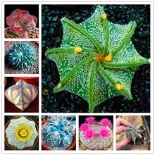 100Pcs Mixed Cactus Seeds Garden Nature Plants Home Purify The Air Fragrance Succulent Flower Fruits Essence Lip Mask PA-A