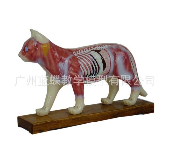 Animal Skeleton Pig Acupuncture Anatomical Acupoint Nursing Massage Model Veterinary Medical Supplies