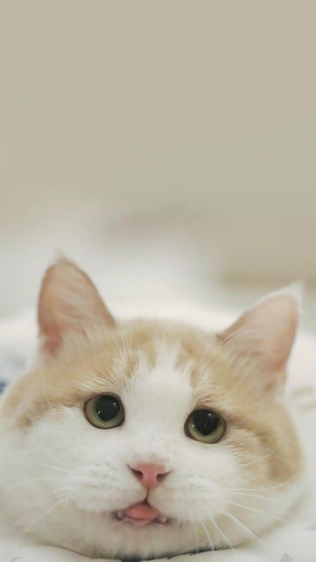 猫片壁纸 :生活不断拍打我们的脸皮,最后不是脸皮厚了,是肿了!插图11