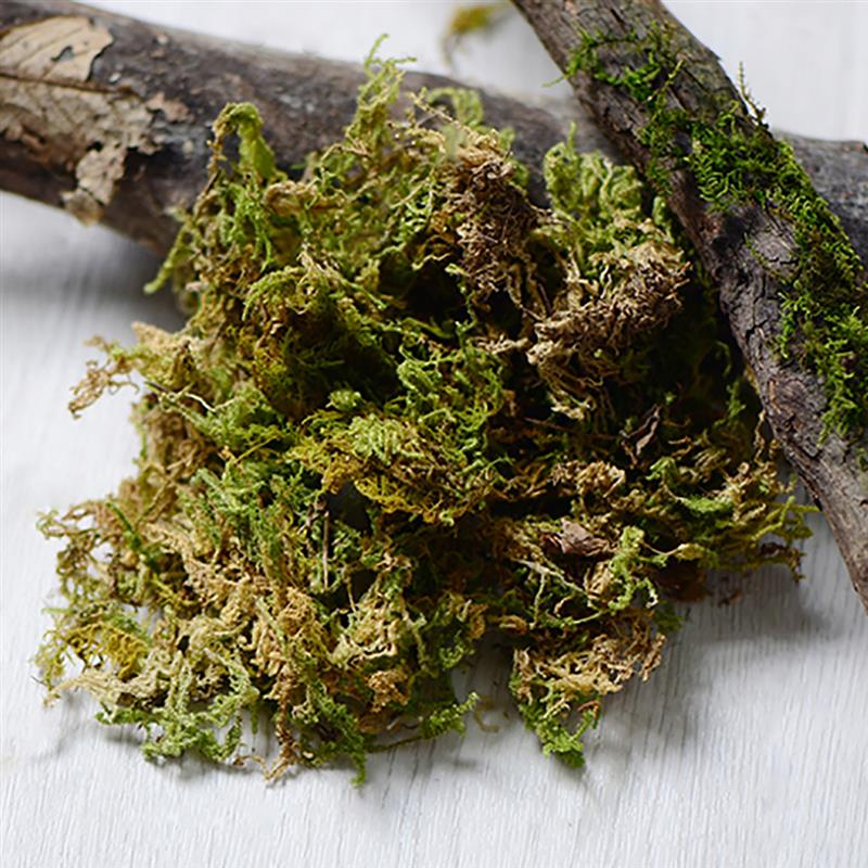 1 Pack Dried Forest Moss Multipurpose Natural Plant Moss Preserved Moss For DIY Crafts Manual DIY Material Accessories