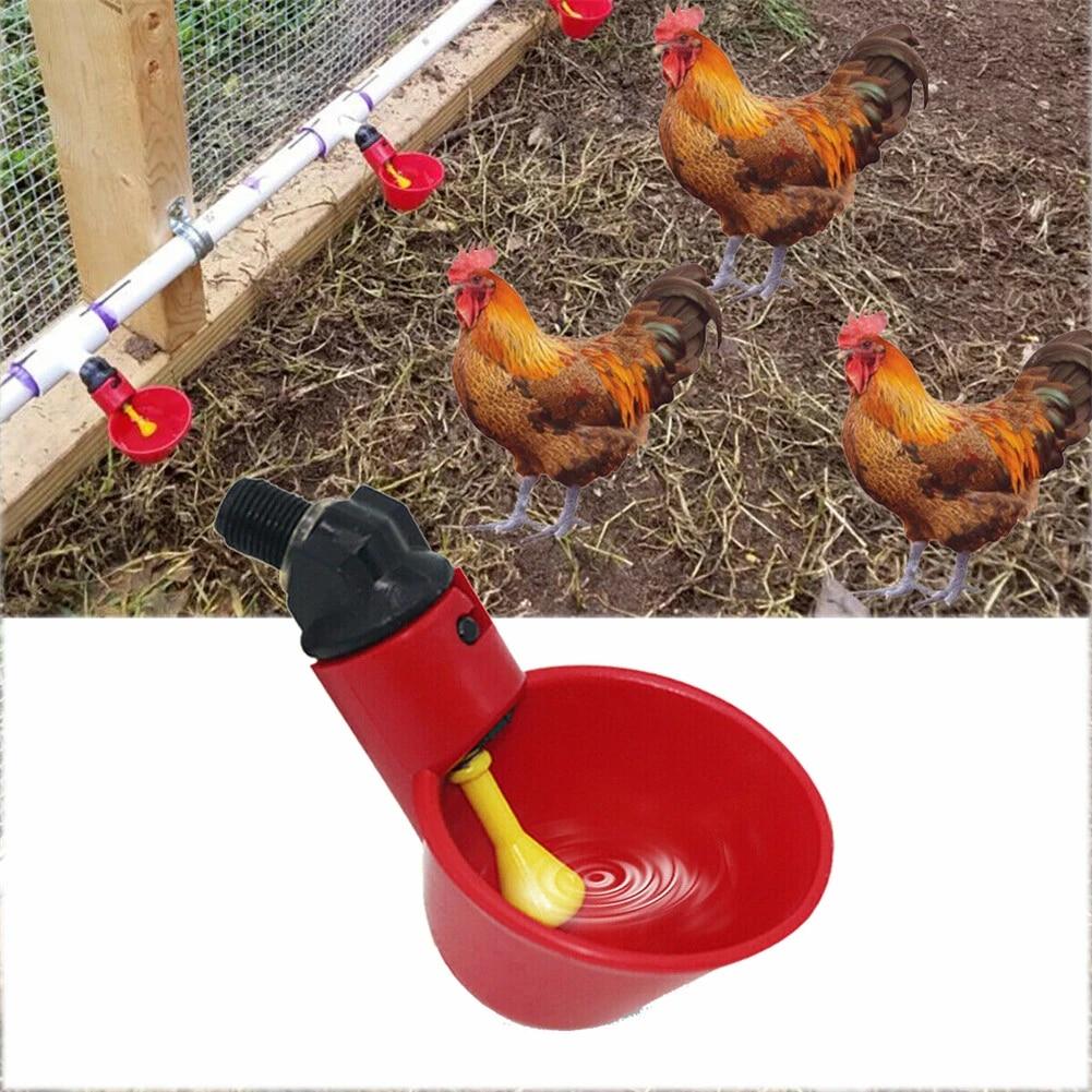 2# Fdit 5PCS Plastic Chicken Drinker Cups Bird Automatic Drinkers Wassertrinkbecher Schalen f/ür Bird Quail Pigeon Chicken Hen MEHRWEG VERPAKUNG